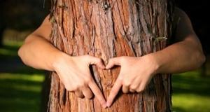 san antonio tree services