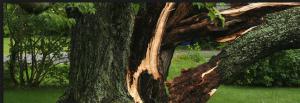 sick tree's cut down