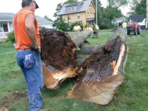 sick tree removal san antonio