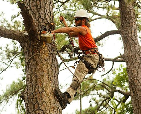 San Antonio's Best Tree Trimming and Pruning Service