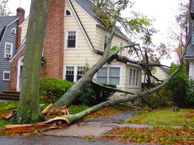 tree storm damage - tree removal san antonio
